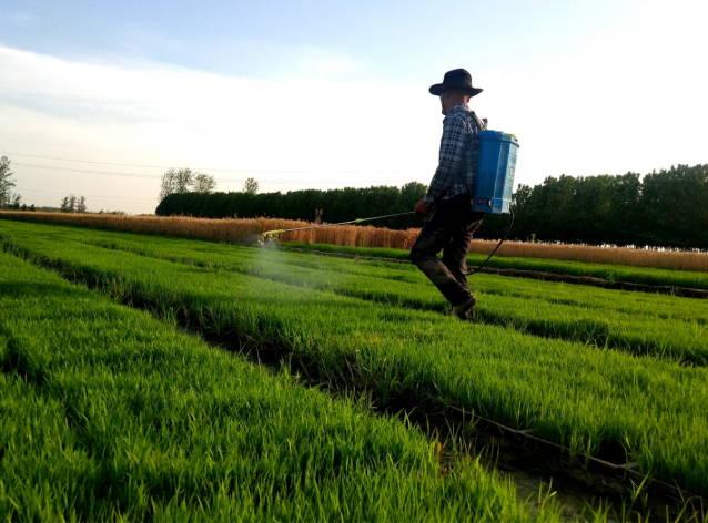 郯城:农民精心管护保秧苗