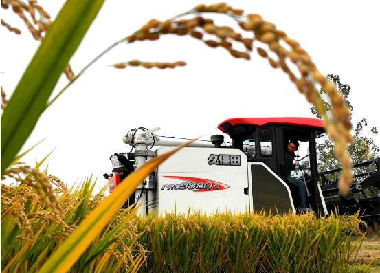 郯城:采莲湖3万亩良种水稻喜获丰收