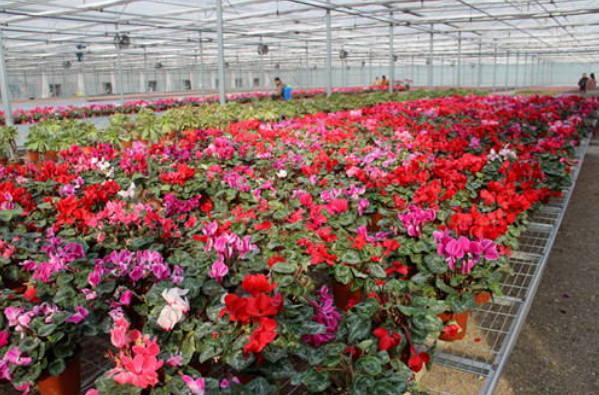 沂水:鲜花产业让乡村更美丽